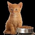 Для котят (до года)