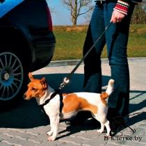 Ремень безопасности для собак автомобильный Trixie 1284