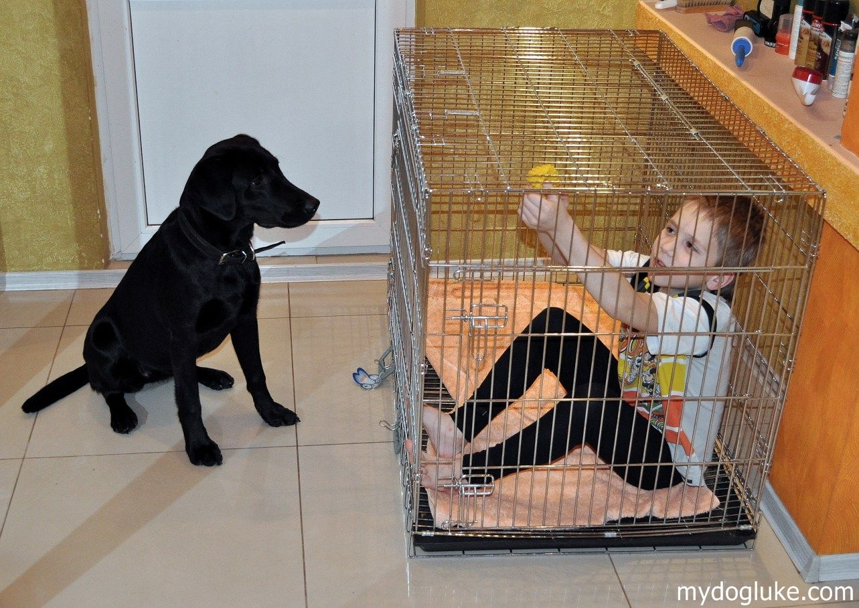 Клетка для собаки - для чего она нужна.